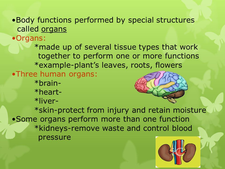 Body functions performed by special structures