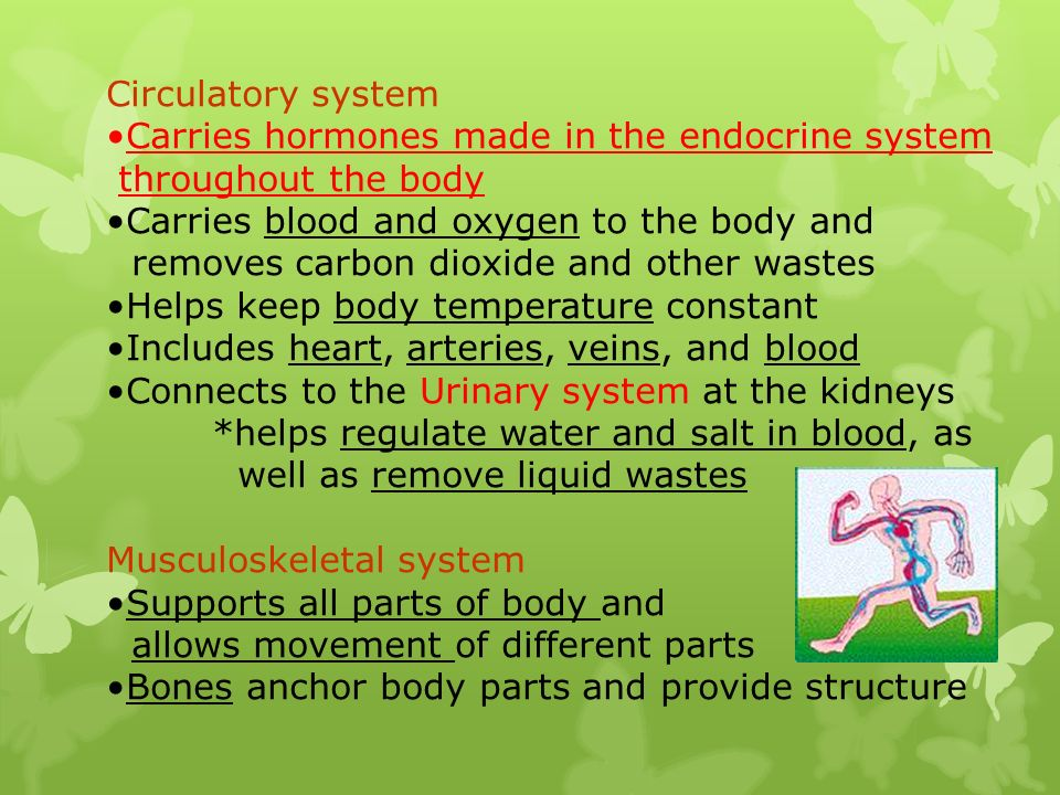 Circulatory system Carries hormones made in the endocrine system. throughout the body. Carries blood and oxygen to the body and.