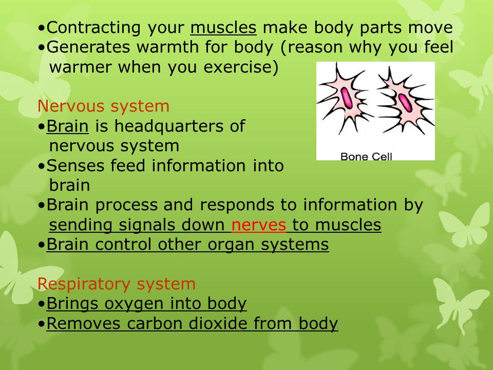 Contracting your muscles make body parts move