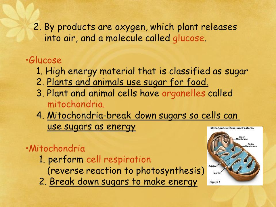 2. By products are oxygen, which plant releases
