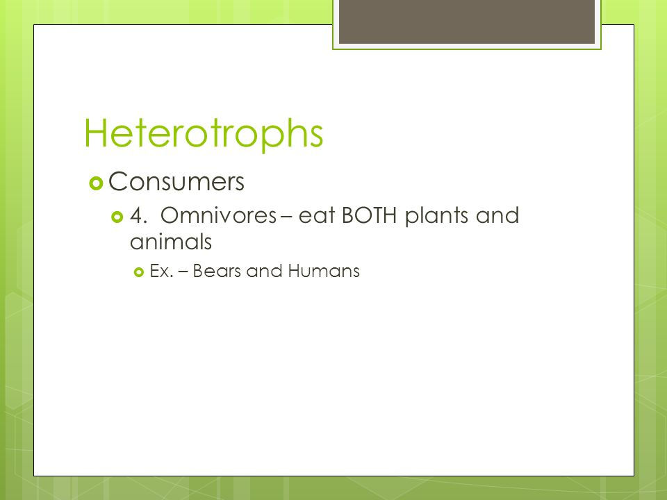 Heterotrophs Consumers 4. Omnivores – eat BOTH plants and animals