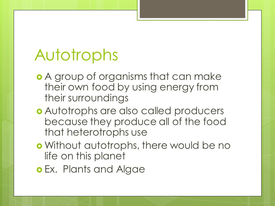 AutotrophsA group of organisms that can make their own food by using energy from their surroundings.