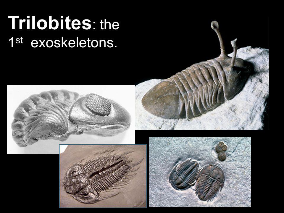 Trilobites: the 1st exoskeletons.
