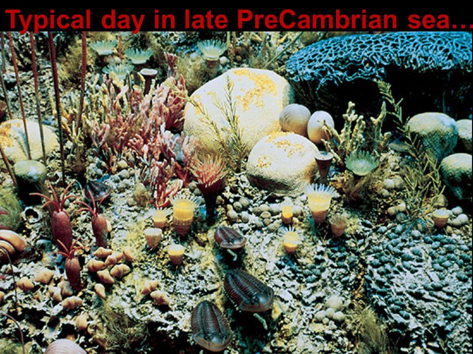 Typical day in late PreCambrian sea…