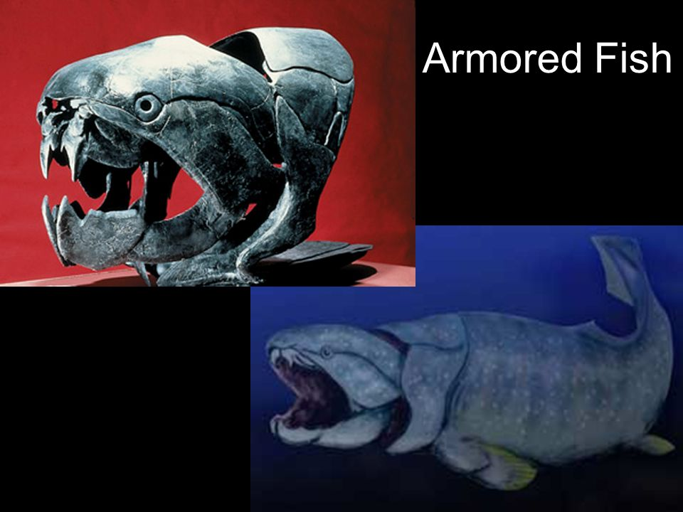 Armored Fish 25