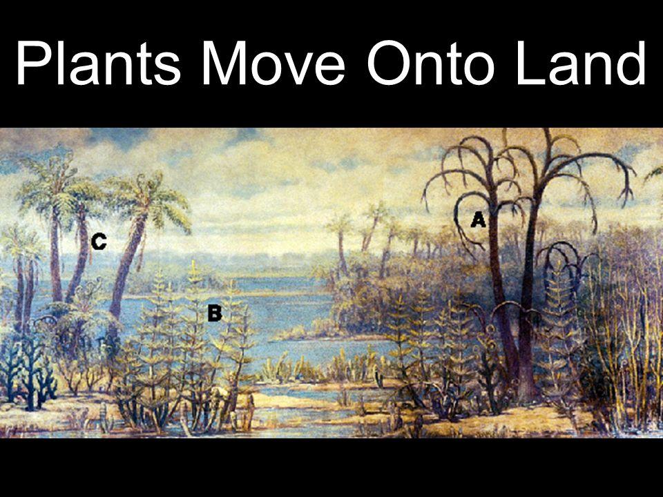 Plants Move Onto Land 28