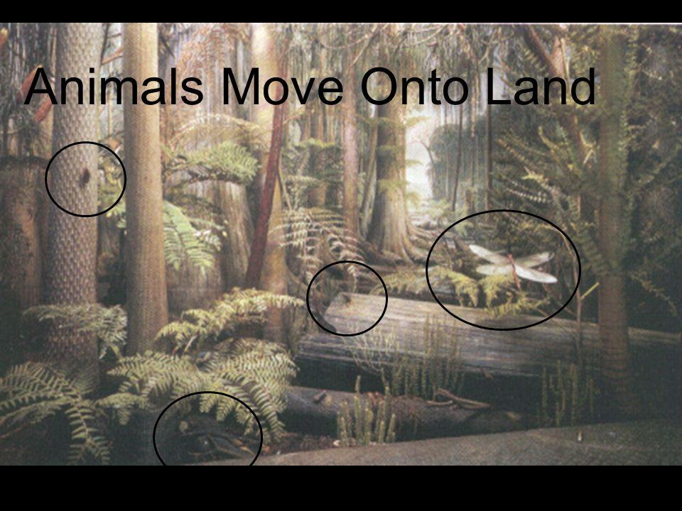 Animals Move Onto Land 30 30