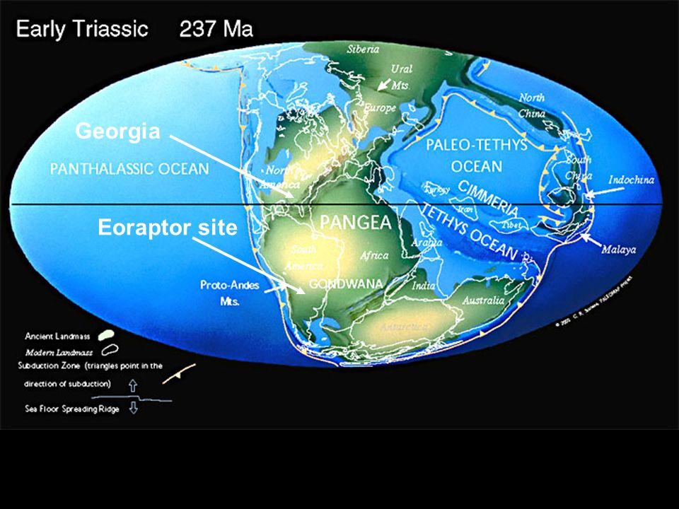 Georgia Eoraptor site 42