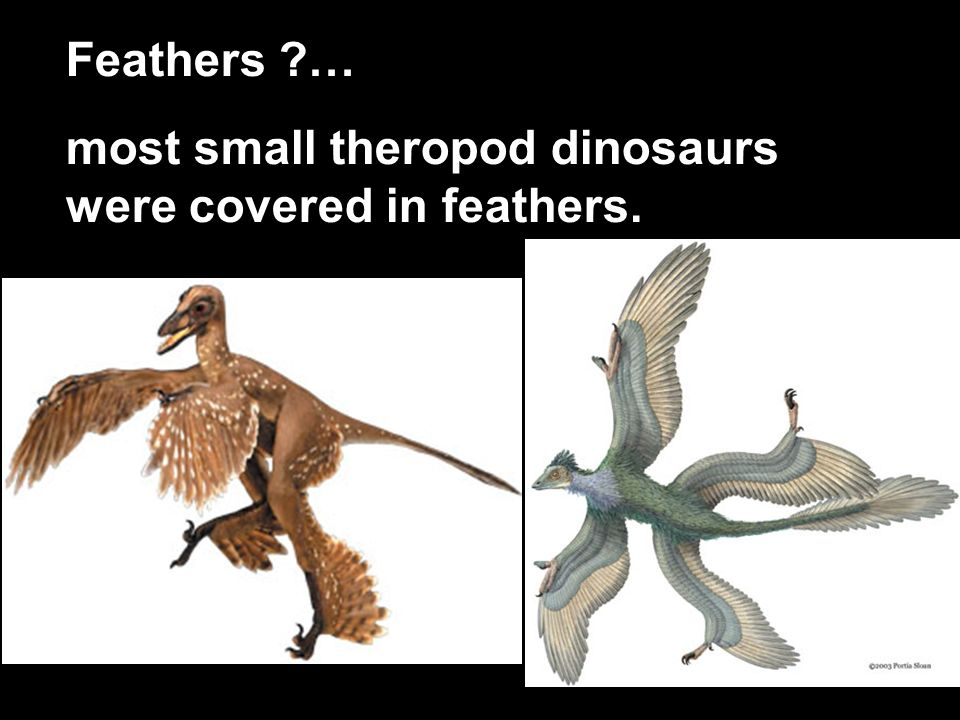 most small theropod dinosaurs were covered in feathers.