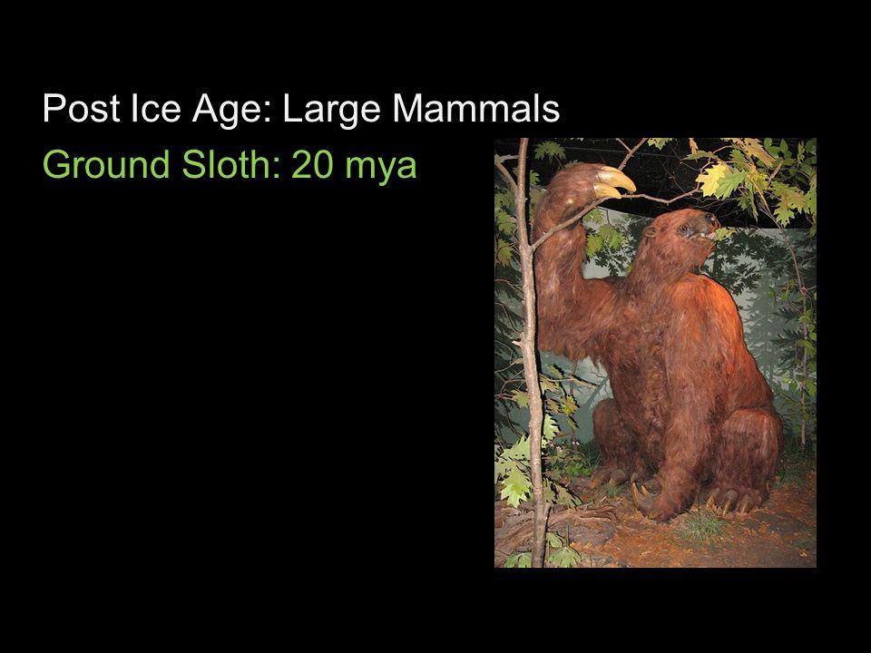 Post Ice Age: Large Mammals Ground Sloth: 20 mya