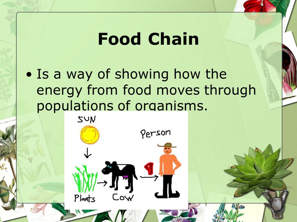 Food Chain Is a way of showing how the energy from food moves through populations of organisms.