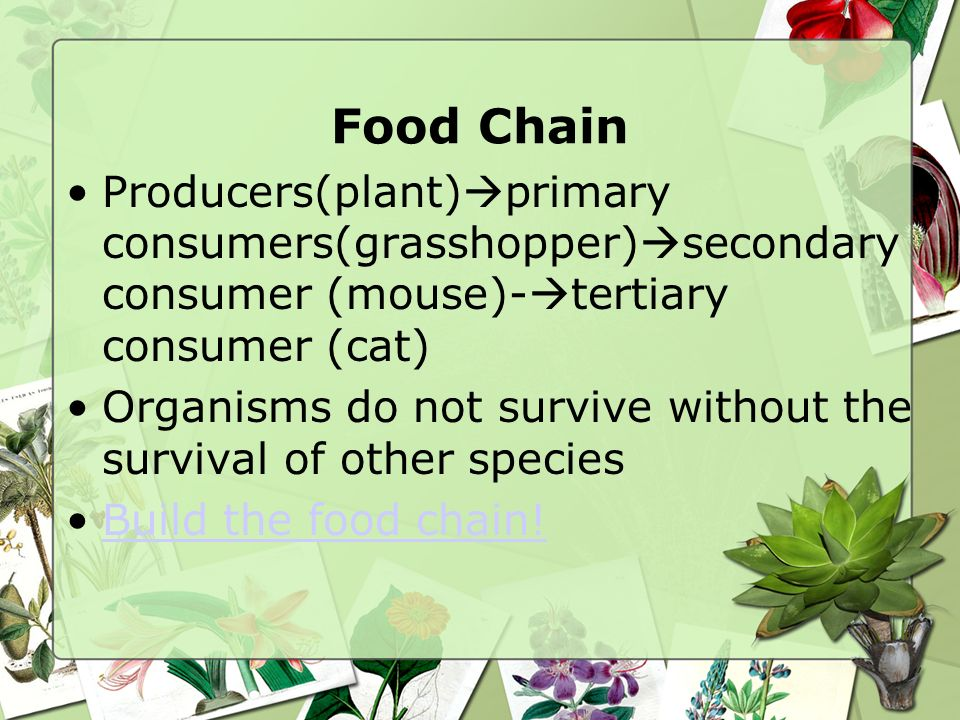 Food Chain Producers(plant)primary consumers(grasshopper)secondary consumer (mouse)-tertiary consumer (cat)