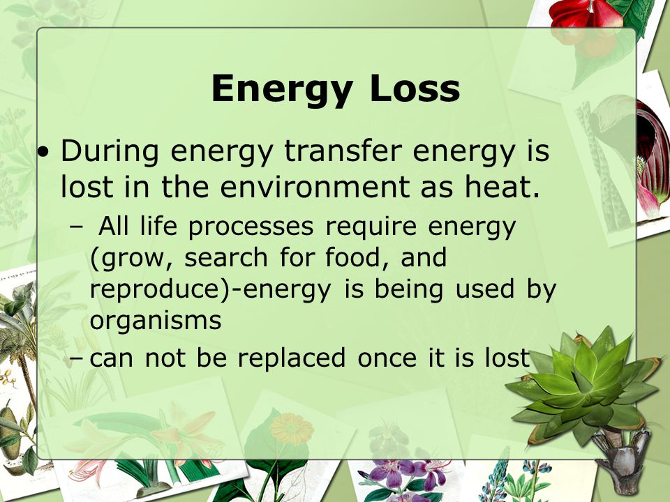 Energy Loss During energy transfer energy is lost in the environment as heat.