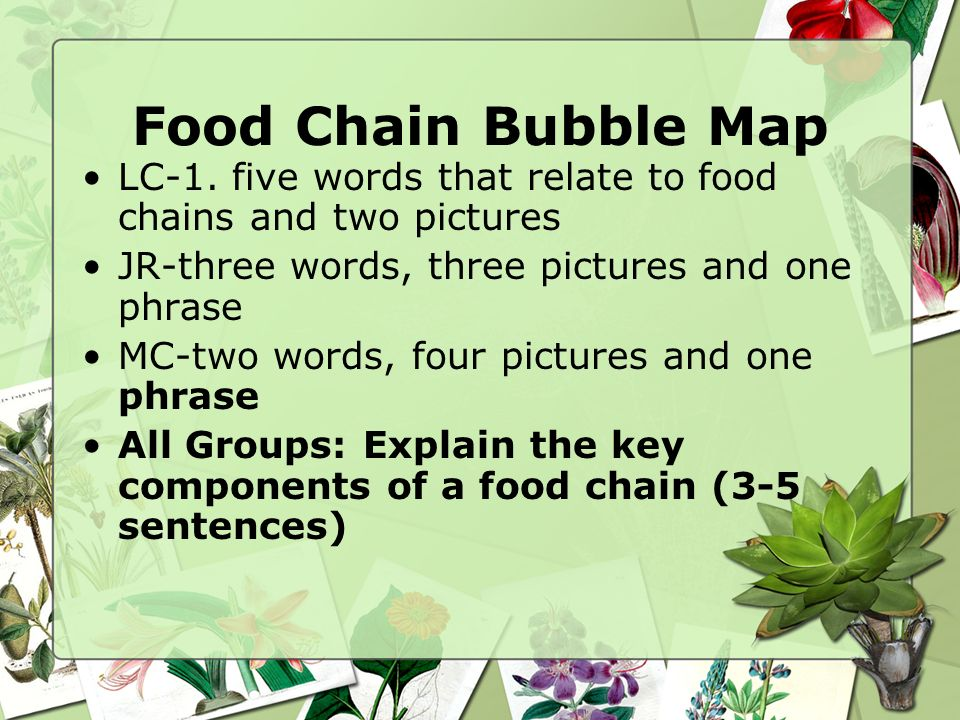 Food Chain Bubble Map LC-1. five words that relate to food chains and two pictures. JR-three words, three pictures and one phrase.