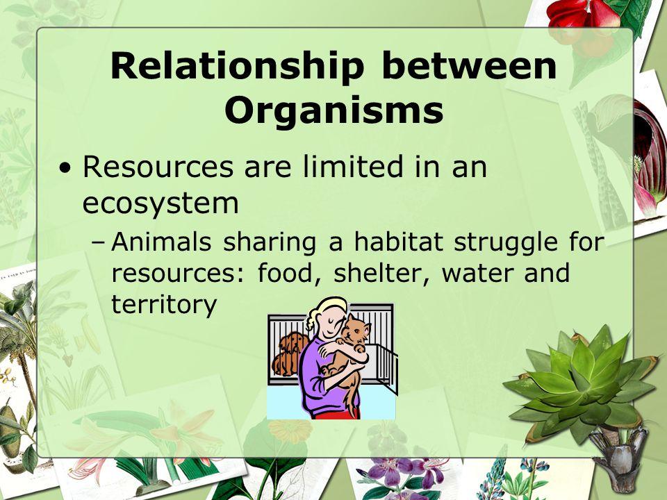 Relationship between Organisms