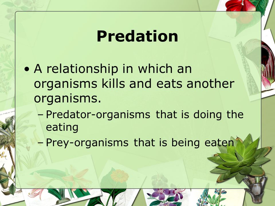Predation A relationship in which an organisms kills and eats another organisms. Predator-organisms that is doing the eating.