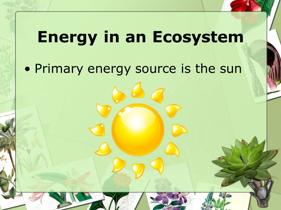 Energy in an Ecosystem Primary energy source is the sun