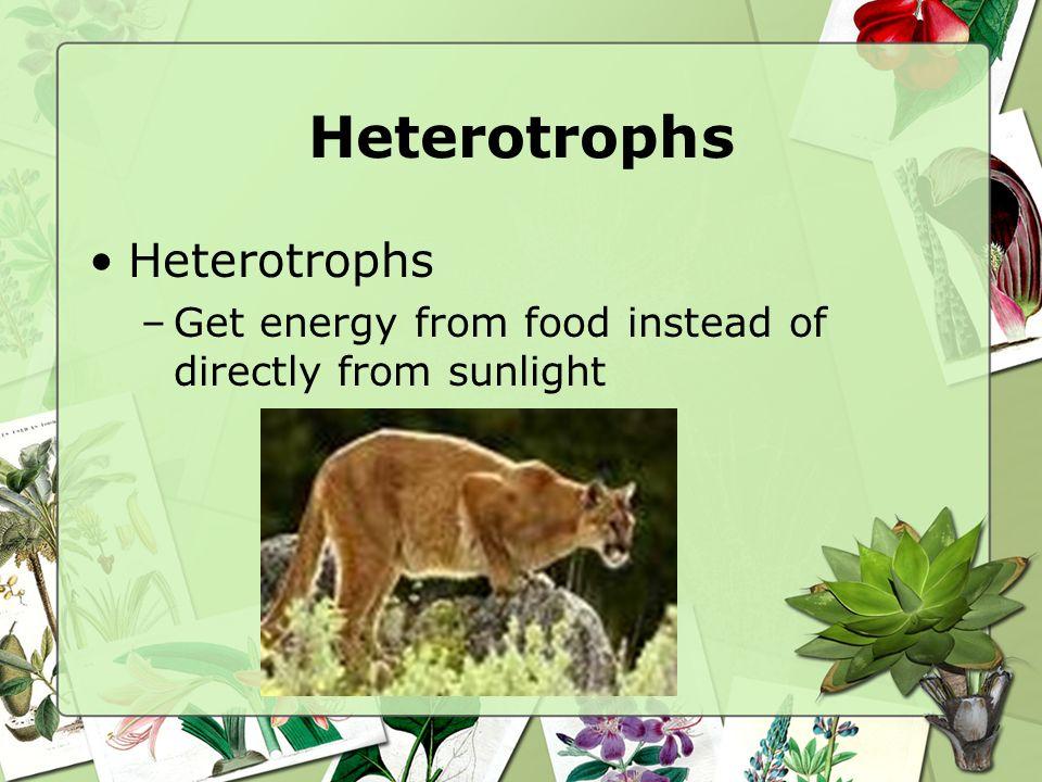 Heterotrophs Heterotrophs