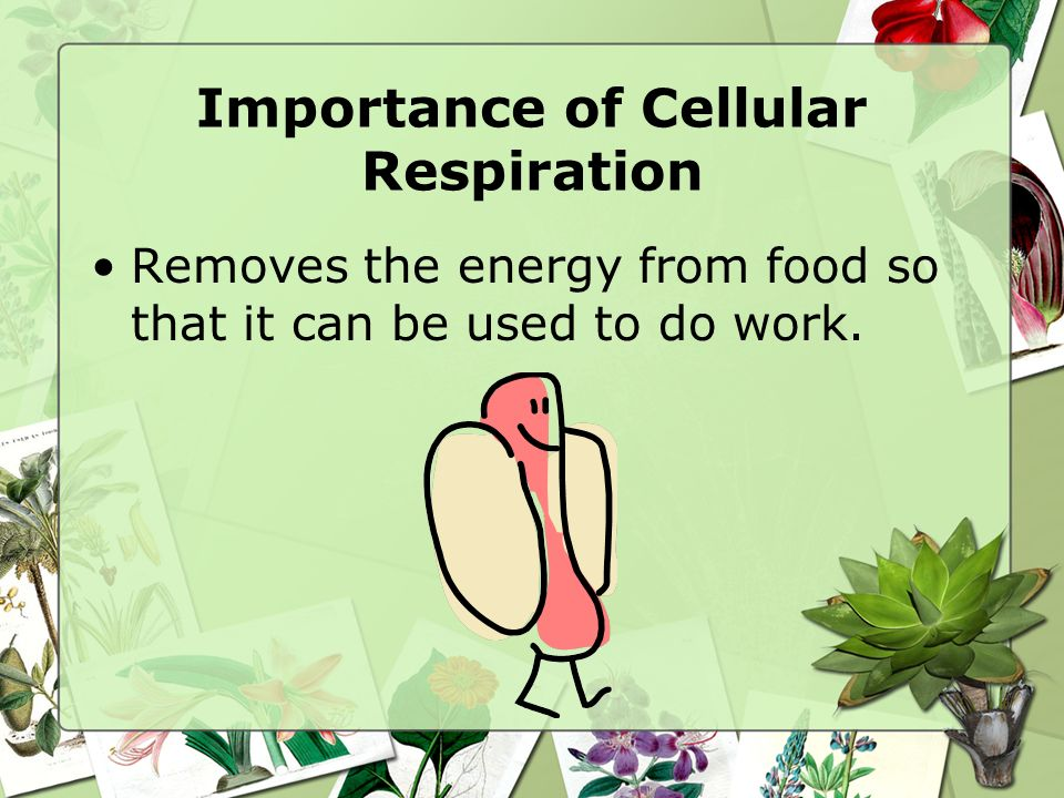 Importance of Cellular Respiration