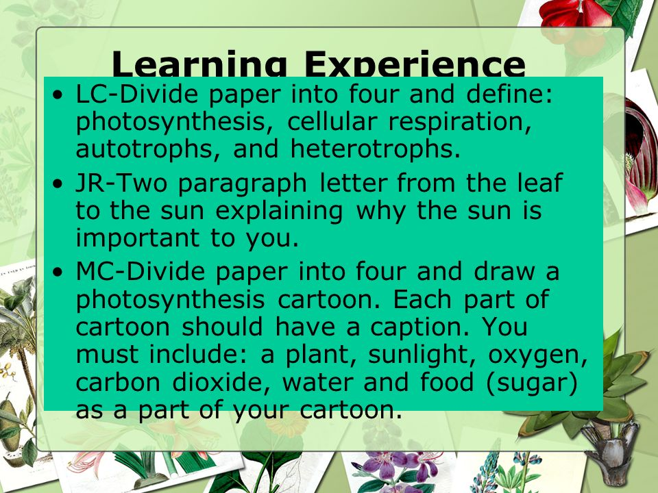 Learning Experience LC-Divide paper into four and define: photosynthesis, cellular respiration, autotrophs, and heterotrophs.