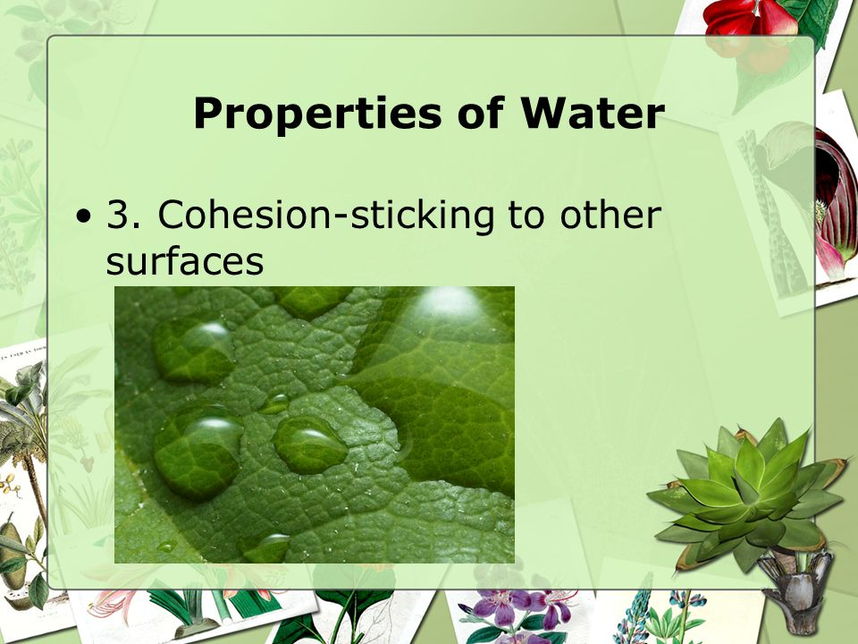 Properties of Water 3. Cohesion-sticking to other surfaces