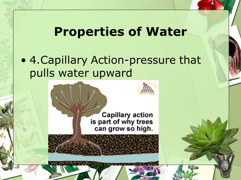 Properties of Water 4.Capillary Action-pressure that pulls water upward