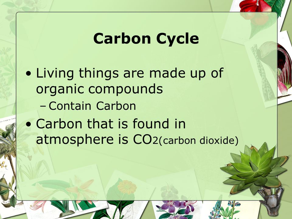 Carbon Cycle Living things are made up of organic compounds