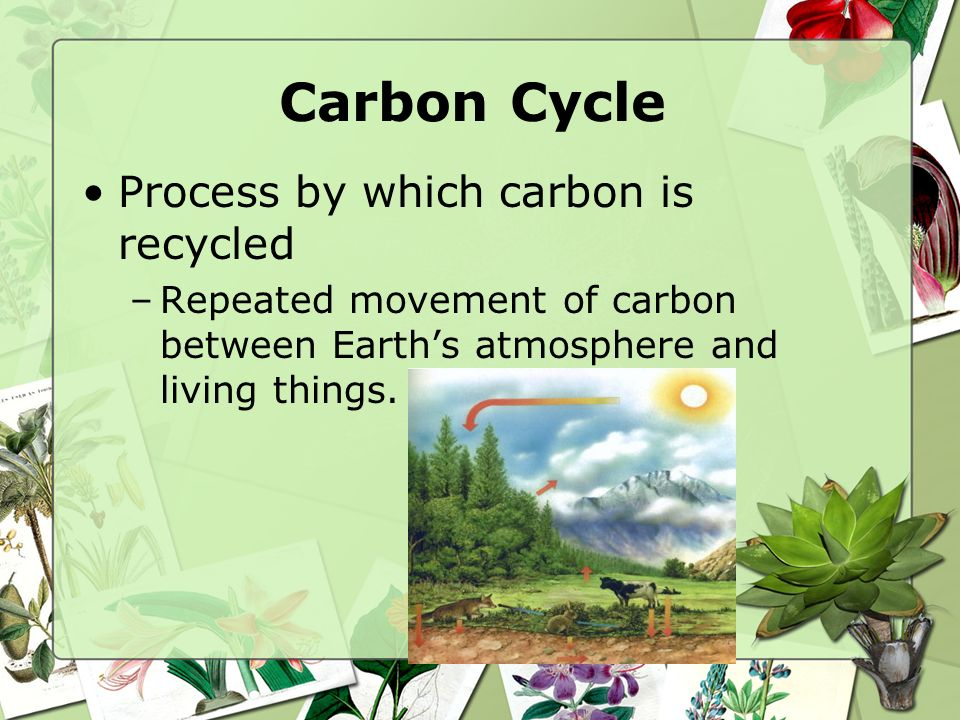 Carbon Cycle Process by which carbon is recycled