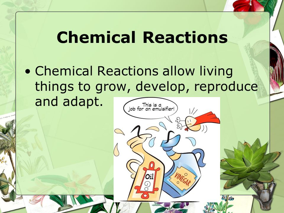 Chemical Reactions Chemical Reactions allow living things to grow, develop, reproduce and adapt.