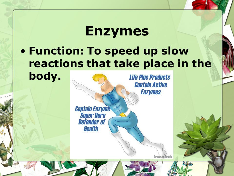 Enzymes Function: To speed up slow reactions that take place in the body.