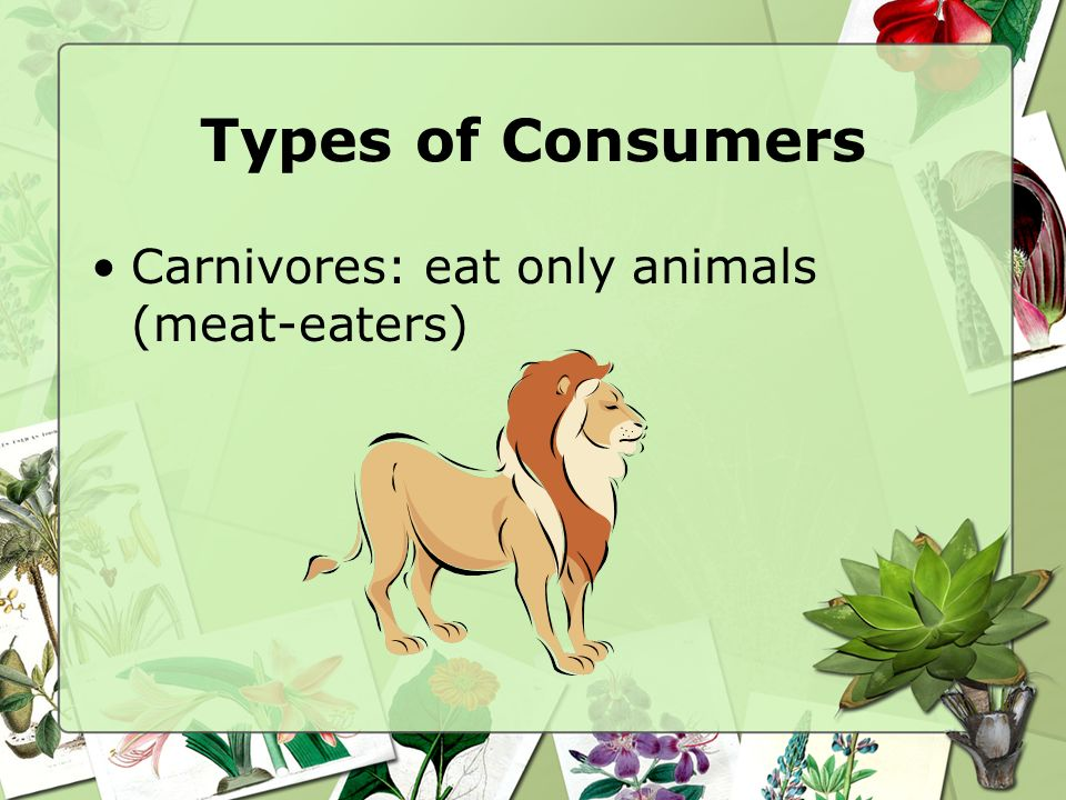 Types of Consumers Carnivores: eat only animals (meat-eaters)