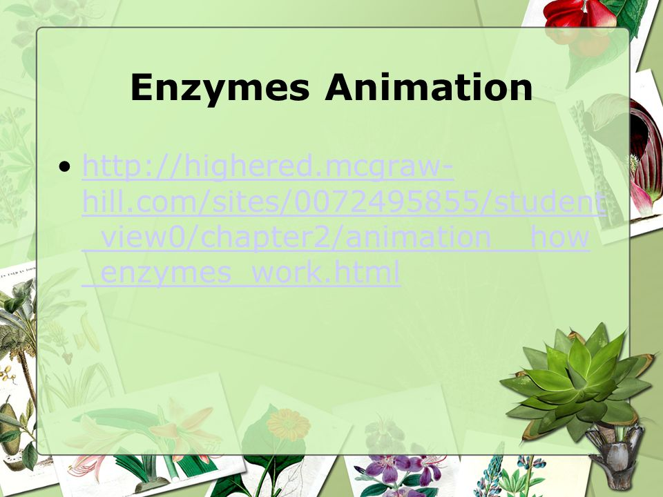 Enzymes Animation http://highered.mcgraw-hill.com/sites/0072495855/student_view0/chapter2/animation__how_enzymes_work.html.