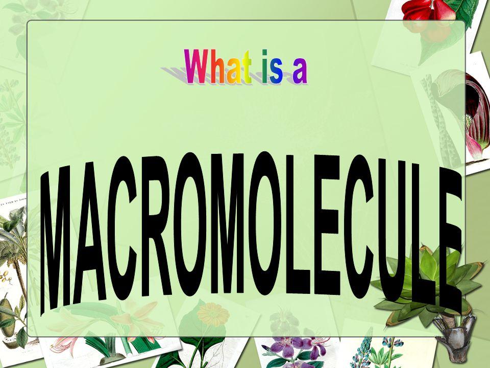 What is a MACROMOLECULE 64