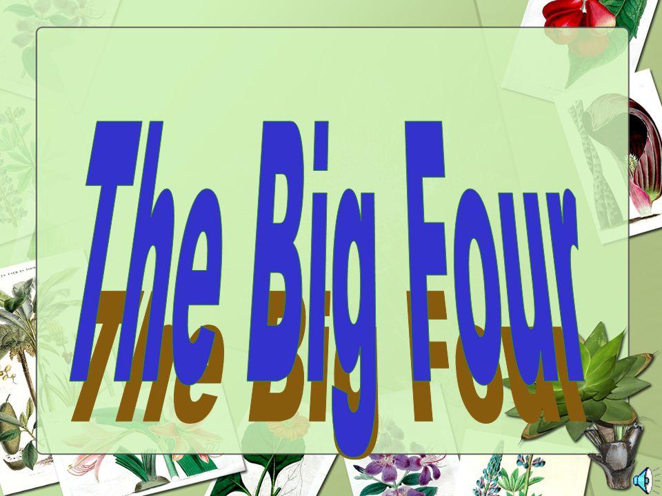 The Big Four 67