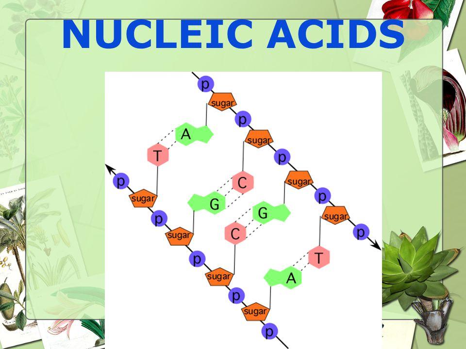 NUCLEIC ACIDS 76