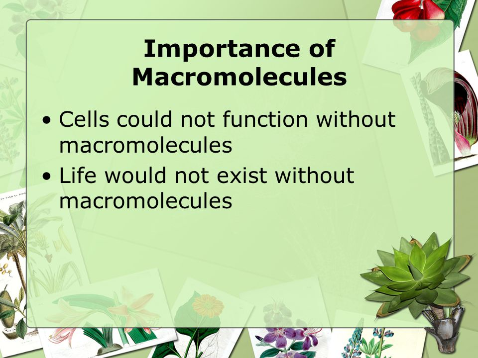 Importance of Macromolecules