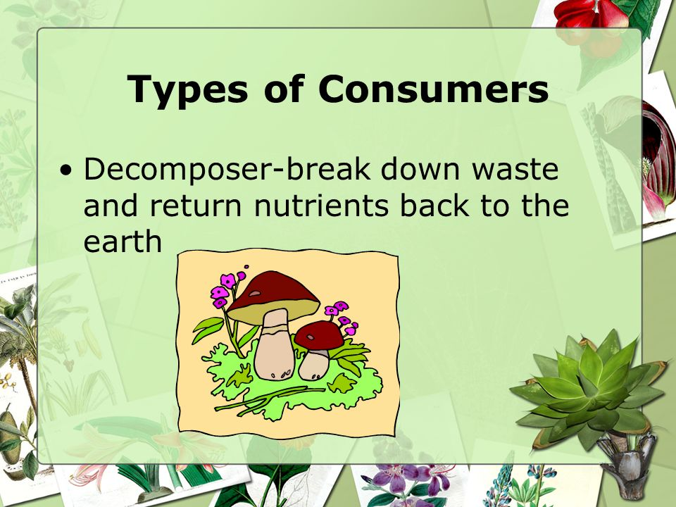 Types of Consumers Decomposer-break down waste and return nutrients back to the earth