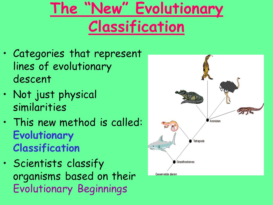 The New Evolutionary Classification