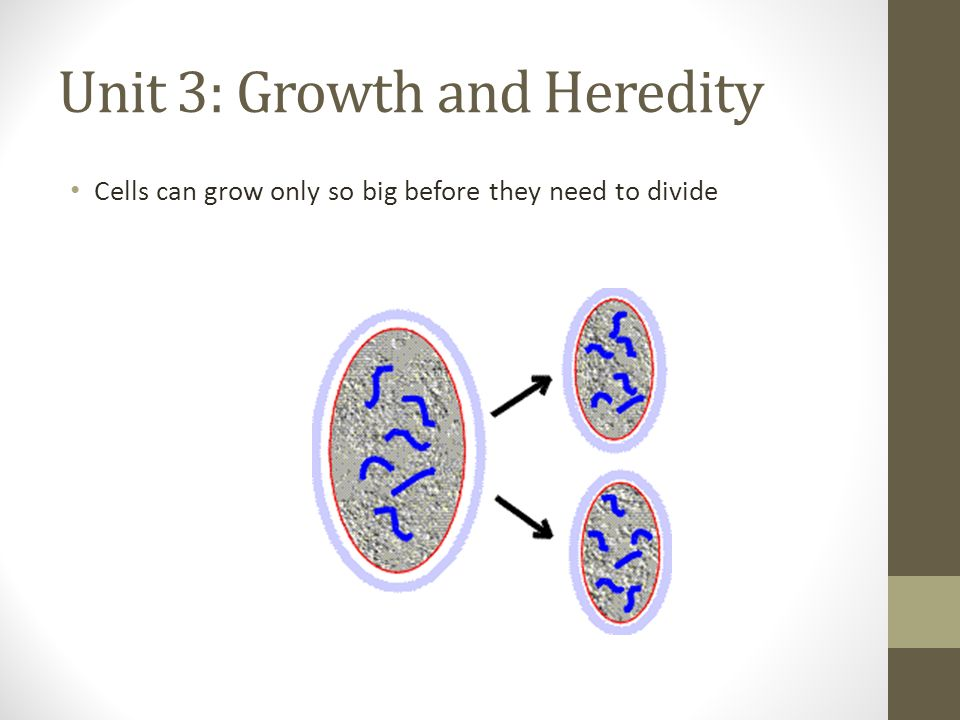 Unit 3: Growth and Heredity