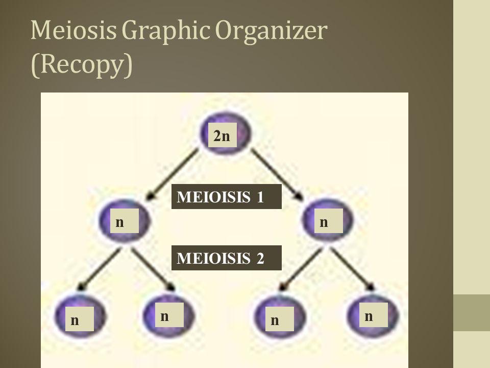 Meiosis Graphic Organizer (Recopy)