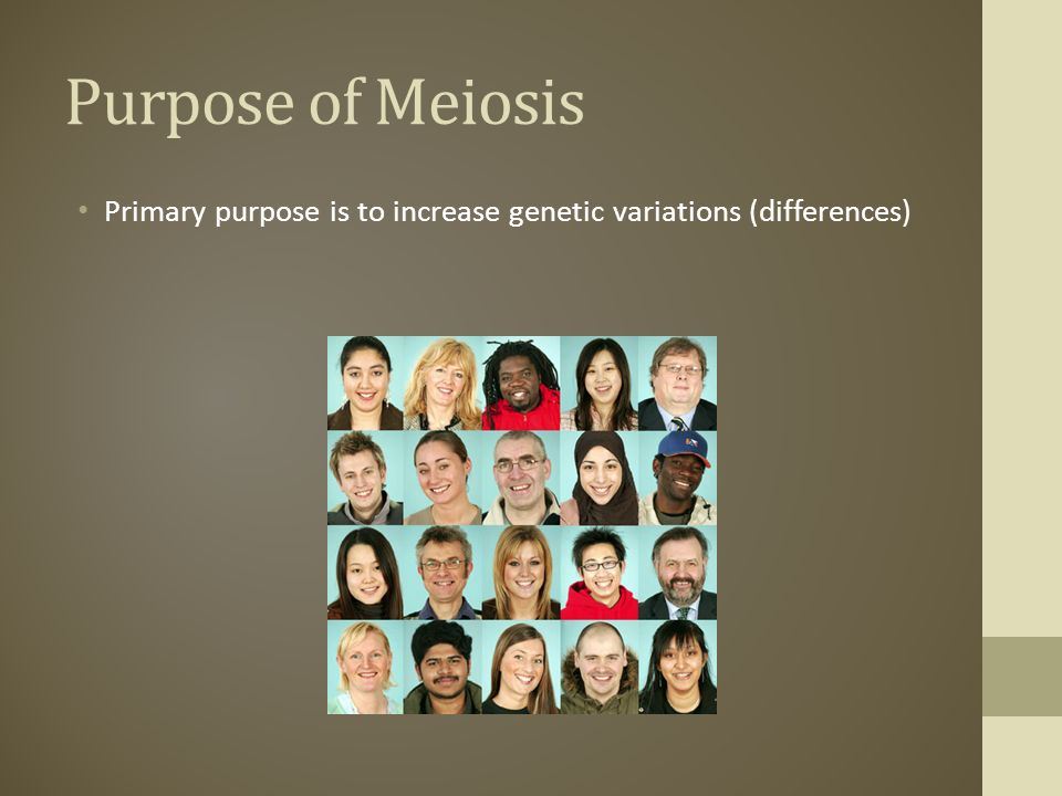 Purpose of Meiosis Primary purpose is to increase genetic variations (differences)