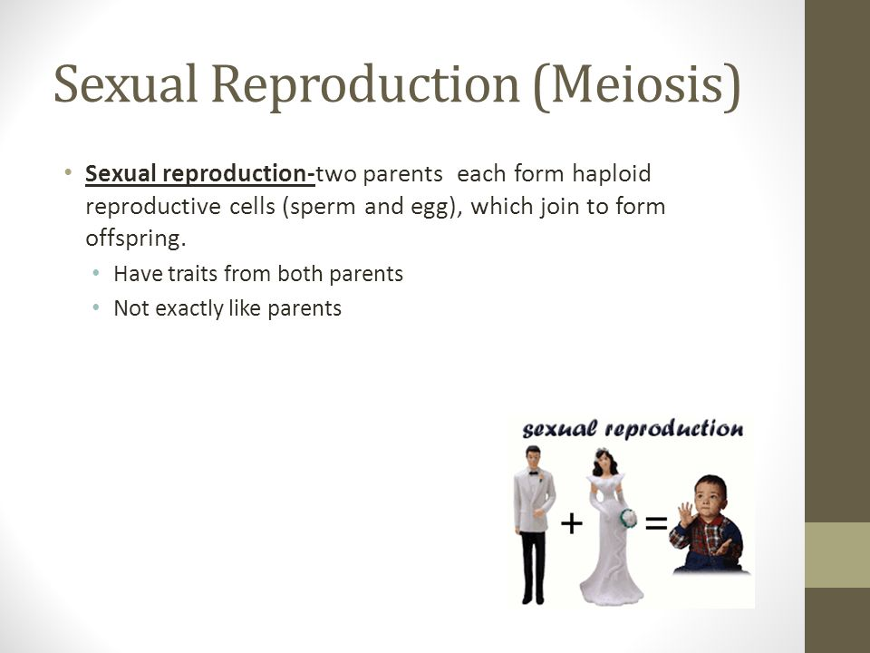 Sexual Reproduction (Meiosis)