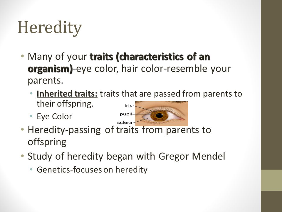 Heredity Many of your traits (characteristics of an organism)-eye color, hair color-resemble your parents.