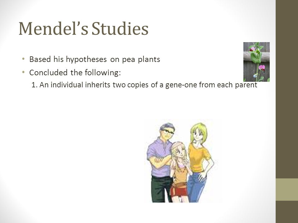 Mendel's Studies Based his hypotheses on pea plants