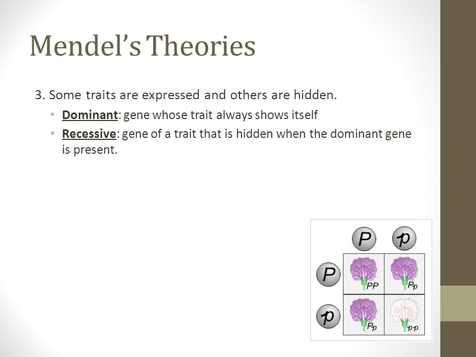 Mendel's Theories 3. Some traits are expressed and others are hidden.