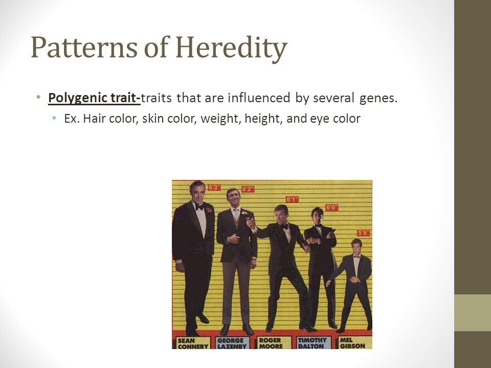 Patterns of Heredity Polygenic trait-traits that are influenced by several genes.
