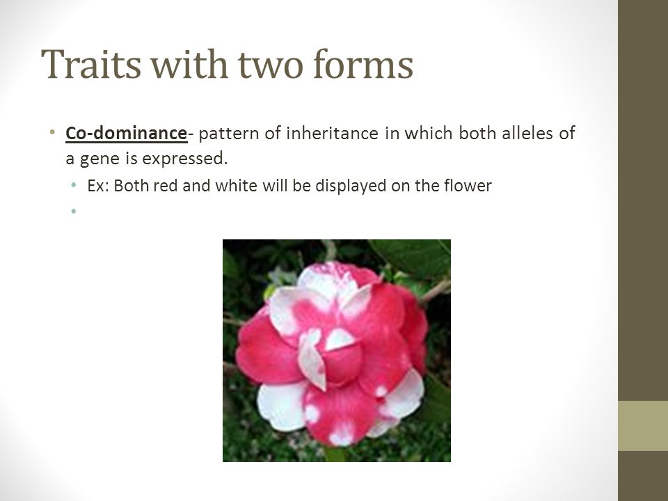 Traits with two forms Co-dominance- pattern of inheritance in which both alleles of a gene is expressed.