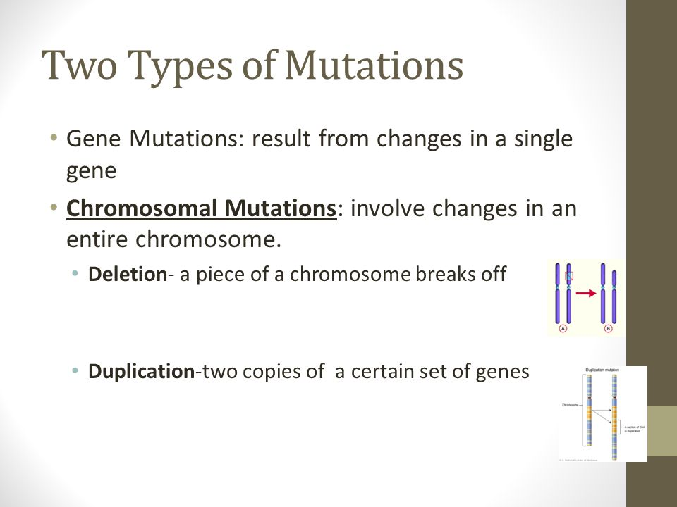 Two Types of Mutations Gene Mutations: result from changes in a single gene. Chromosomal Mutations: involve changes in an entire chromosome.
