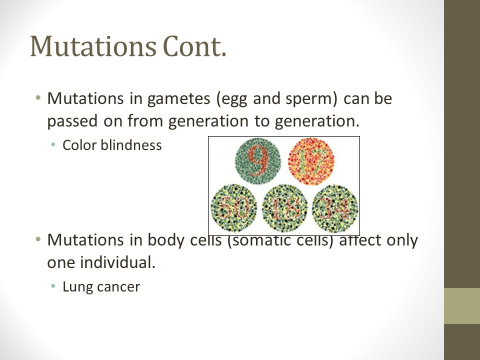 Mutations Cont. Mutations in gametes (egg and sperm) can be passed on from generation to generation.