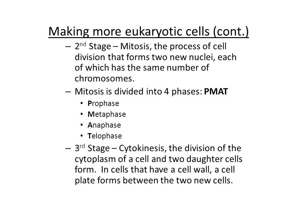 Making more eukaryotic cells (cont.)